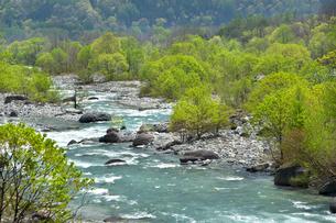 松川の青い流れと新緑の写真素材 [FYI00023545]