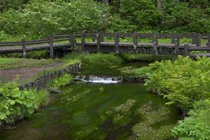 姫川源流の散策路の写真素材 [FYI00023547]