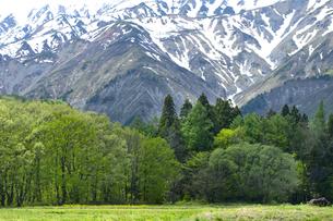 残雪の山肌と新緑の森の写真素材 [FYI00023548]