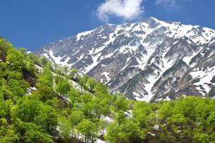 新緑の白馬岳の写真素材 [FYI00023549]