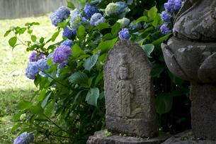 アジサイの花と石仏の写真素材 [FYI00023552]