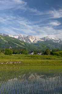 初夏の絹雲と白馬三山の写真素材 [FYI00023554]