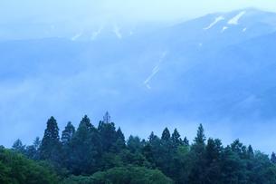 梅雨時の森と山々の雪渓の写真素材 [FYI00023555]
