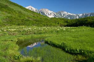 白馬鑓を映す池塘の写真素材 [FYI00023577]