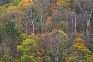 山裾の錦模様の写真素材 [FYI00023578]