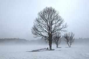 雪霧1 -白馬深空にて-の素材 [FYI00023594]