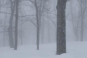 濃霧のブナ林の写真素材 [FYI00023597]