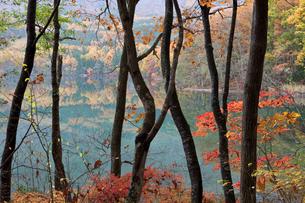 青木湖畔の紅葉の素材 [FYI00023607]