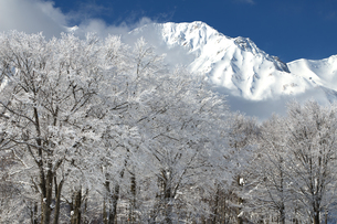杓子岳と岩岳山頂ブナ林の霧氷の素材 [FYI00023613]