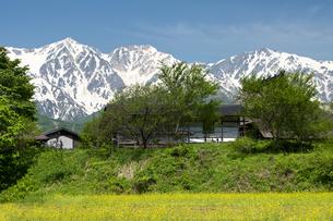 春の白馬三山と茅葺き民家の写真素材 [FYI00023634]