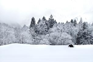 晩冬の白馬深空の森の写真素材 [FYI00023698]
