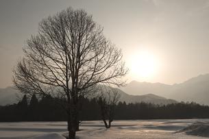 雪原と五龍岳の夕景-晩冬の白馬深空にての写真素材 [FYI00023707]