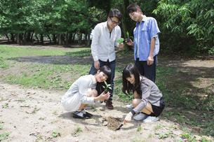 植樹をする学生たちの写真素材 [FYI00023722]