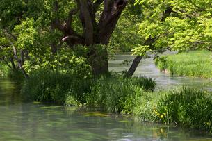 川の合流の写真素材 [FYI00023728]