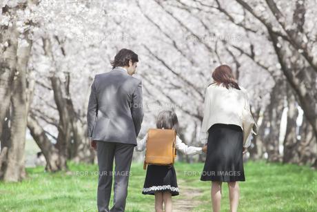 桜並木を歩く家族の素材 [FYI00023762]