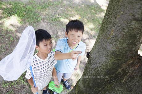 カブトムシを採る小学生の素材 [FYI00023799]