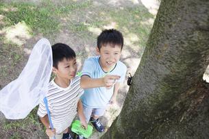 カブトムシを採る小学生の写真素材 [FYI00023799]
