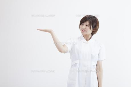 看護師の写真素材 [FYI00023910]