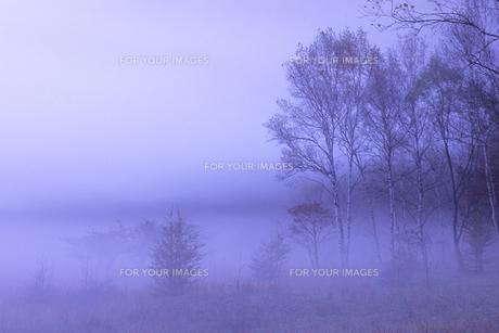 朝霧と木々たち、Morning mist and Trees,の素材 [FYI00024632]