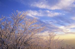 朝日に照らされる霧氷の素材 [FYI00024634]