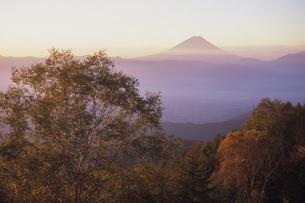 朝日を浴びる富士と樹木、Fuji and trees and bathed in the morning sunの写真素材 [FYI00024720]