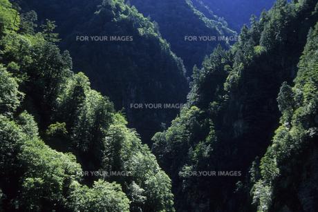 緑の黒部峡谷の光と影、Green of Kurobe Gorge of light and shadow,の素材 [FYI00024737]