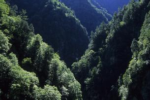 緑の黒部峡谷の光と影、Green of Kurobe Gorge of light and shadow,の写真素材 [FYI00024737]