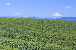 青い空と茶畑、Blue sky and tea plantations,の素材 [FYI00024741]