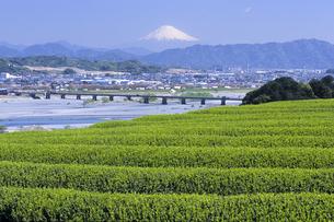 富士山と茶畑、Fuji and tea plantations,の写真素材 [FYI00024745]