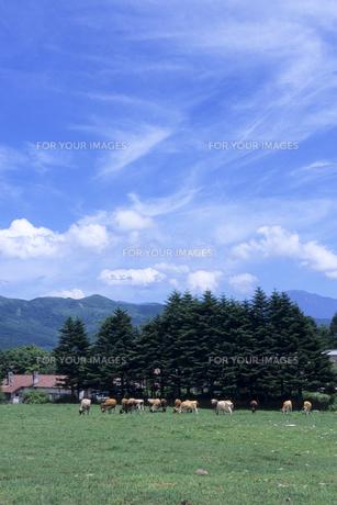 青空と牧場、Blue sky and ranch,の素材 [FYI00024747]