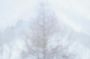 霧の中の樹木、Trees in the fog,の素材 [FYI00024775]