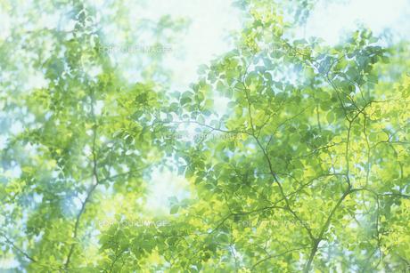 新緑、Fresh green,の素材 [FYI00024789]