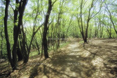 木漏れ日と小道、Sunlight and trails,.の素材 [FYI00024794]