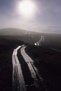二本の木道、Two trees road,の素材 [FYI00024797]