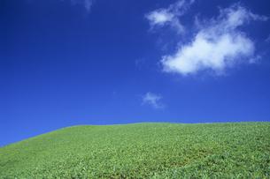 草原の青い空、Grassland blue sky,の素材 [FYI00024801]