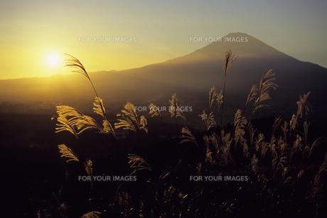 夕富士とススキ1、Evening Fuji and pampas grass 1,.の素材 [FYI00024819]