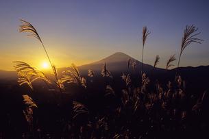 夕富士とススキ、Evening Fuji and pampas grass,の素材 [FYI00024820]