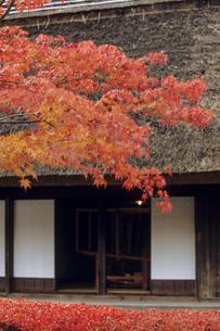 茅葺き屋根と紅葉、Thatched roof and autumn leaves,の写真素材 [FYI00024829]