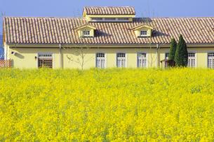 菜の花とお家、Rape flowers and a houseの写真素材 [FYI00024860]