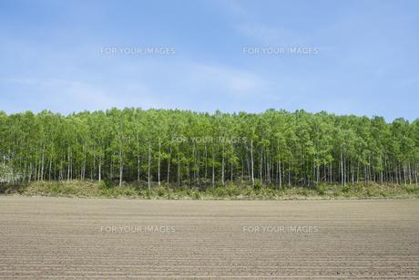 北海道大空町の新緑と畑の素材 [FYI00024880]