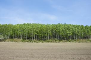 北海道大空町の新緑と畑の写真素材 [FYI00024880]