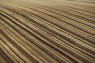 美瑛町の初夏の畑の写真素材 [FYI00024887]
