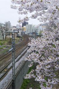 小樽市の線路と桜の写真素材 [FYI00024896]