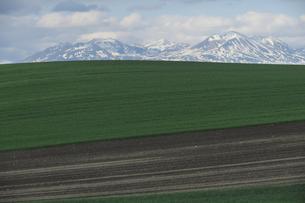 上富良野町より大雪山と畑の写真素材 [FYI00024897]
