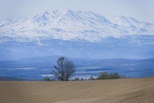上富良野町より大雪山旭岳と木の写真素材 [FYI00024898]