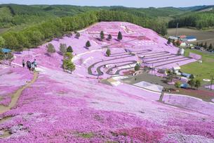 北海道ひがしもこと芝桜公園の芝桜の写真素材 [FYI00024899]