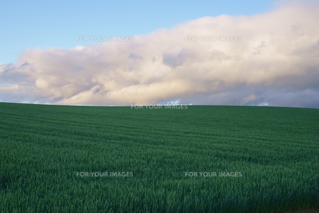 美瑛町の畑と夕暮れの空の素材 [FYI00024902]