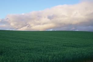 美瑛町の畑と夕暮れの空の写真素材 [FYI00024902]