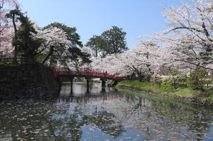 弘前公園の鷹丘橋と桜の写真素材 [FYI00024903]