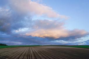 美瑛町の畑と夕焼けの空の写真素材 [FYI00024915]